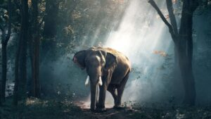 Elephant Quotes and Sayings