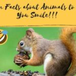 Top 10 Fun Facts about Animals to Make You Smile